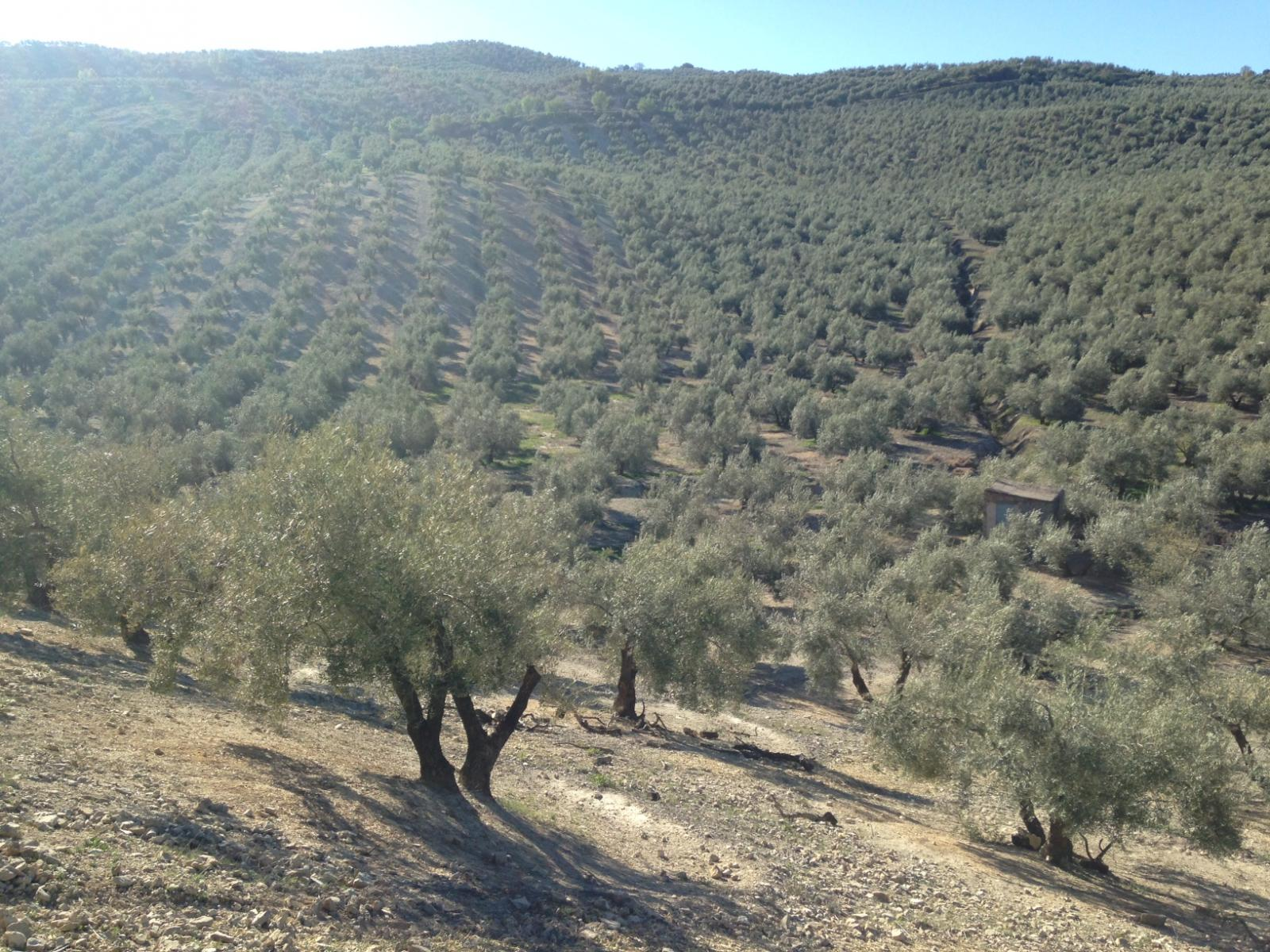 Finca en Venta en Montillana